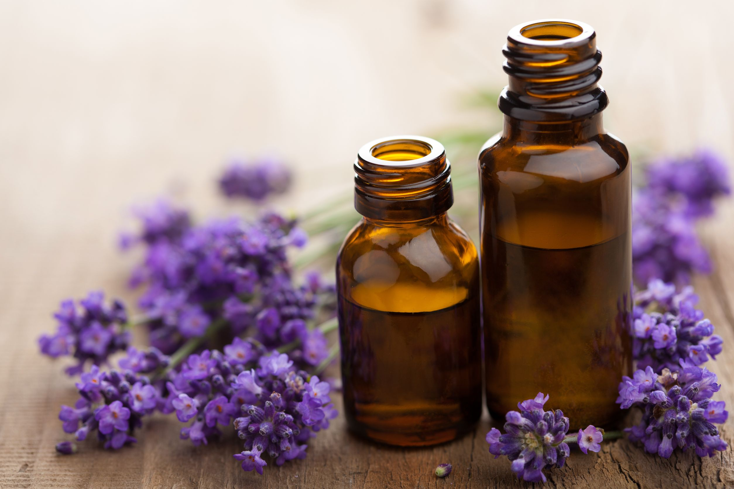 15163126 – essential oil and lavender flowers